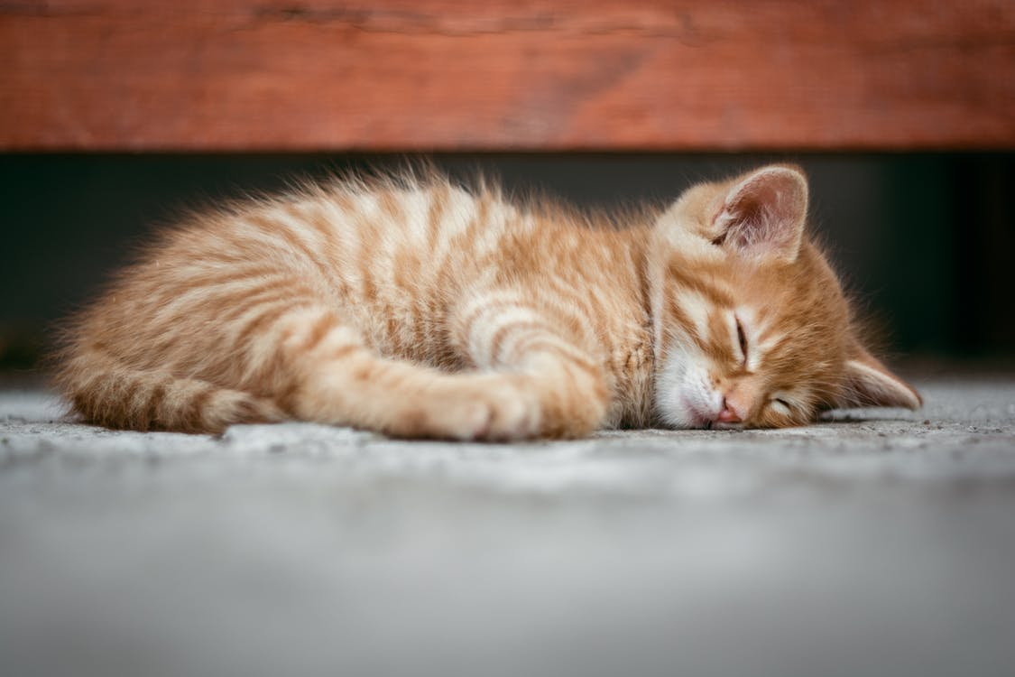 Sen. Jak dbać o higienę snu